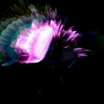 vlcsnap-2012-03-03-20h47m23s214