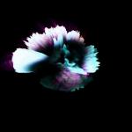 vlcsnap-2012-03-03-20h47m43s160