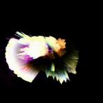 vlcsnap-2012-03-03-20h47m45s177