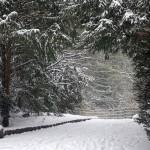 Winter_2